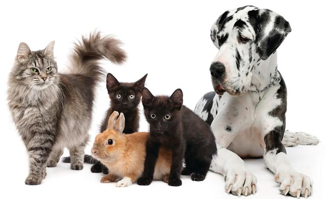 alimentation animaux domestique