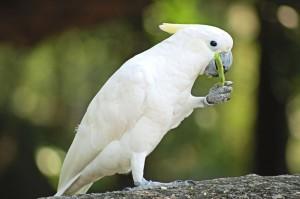 oiseau 0